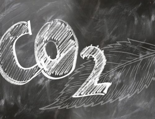 Carbon reduction in 2019 by Hannah Collings
